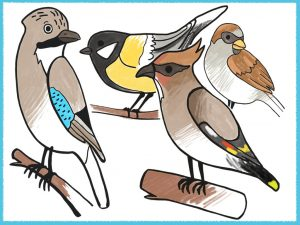 Winter Coloring Pages For Kids With Birds Amax Kids